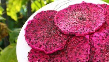 Vietnamese soft dried dragon fruit