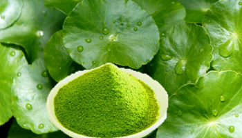 Vietnamese pennywort powder